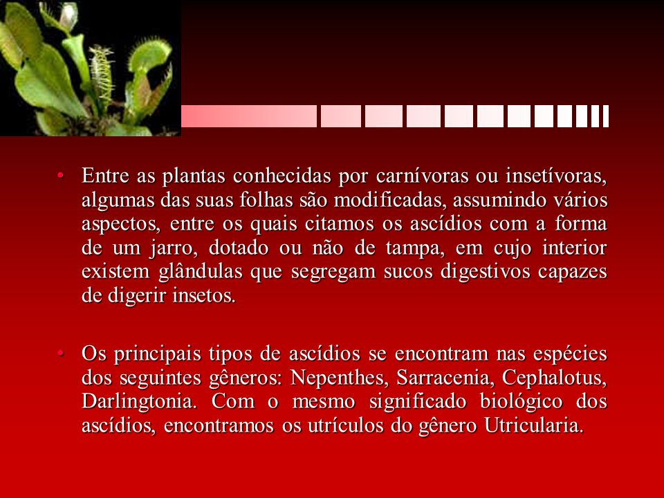 Entre as plantas conhecidas por carnívoras ou insetívoras, algumas das suas folhas são modificadas, assumindo vários aspectos, entre os quais citamos