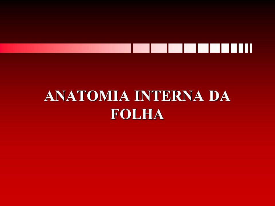 ANATOMIA INTERNA DA FOLHA