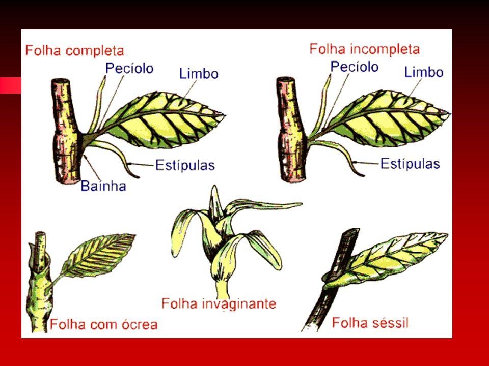 Quanto à forma os principais tipos de lâmina são: simples (limbo indiviso) esimples (limbo indiviso) e composta (limbo dividido em folíolos).composta (limbo dividido em folíolos).
