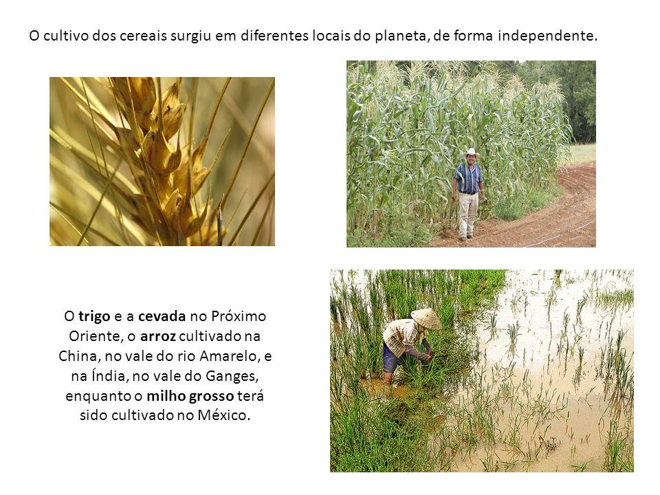 O cultivo dos cereais surgiu em diferentes locais do planeta, de forma independente. O trigo e a cevada no Próximo Oriente, o arroz cultivado na China