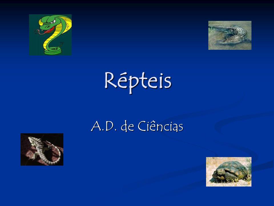Classes: Quelônios- tartarugas Quelônios- tartarugas Crocodilianos- crocodilos e jacarés Crocodilianos- crocodilos e jacarés Rincocéfalos- tuatara Rincocéfalos- tuatara Escamados- cobras e lagartos Escamados- cobras e lagartos