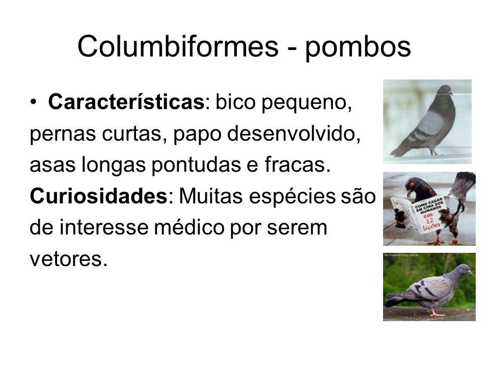 Columbiformes - pombos Características: bico pequeno, pernas curtas, papo desenvolvido, asas longas pontudas e fracas. Curiosidades: Muitas espécies s