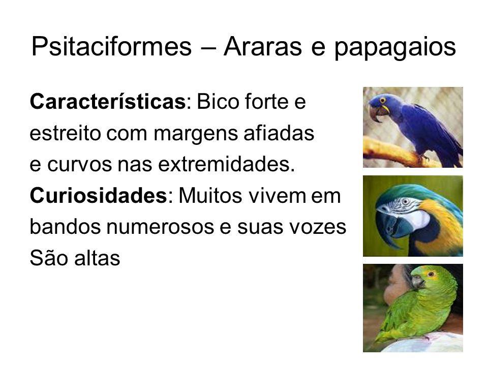 Psitaciformes – Araras e papagaios Características: Bico forte e estreito com margens afiadas e curvos nas extremidades. Curiosidades: Muitos vivem em