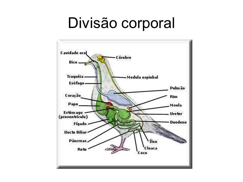 Classes As diversas espécies de aves são divididas em várias classes: Passeriformes Anseriformes Galiformes Columbiformes Psitaciformes Estrigformes Falconiformes