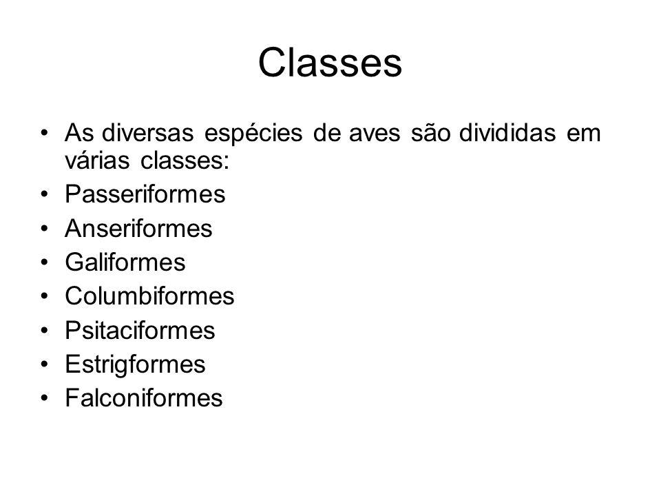 Classes As diversas espécies de aves são divididas em várias classes: Passeriformes Anseriformes Galiformes Columbiformes Psitaciformes Estrigformes F