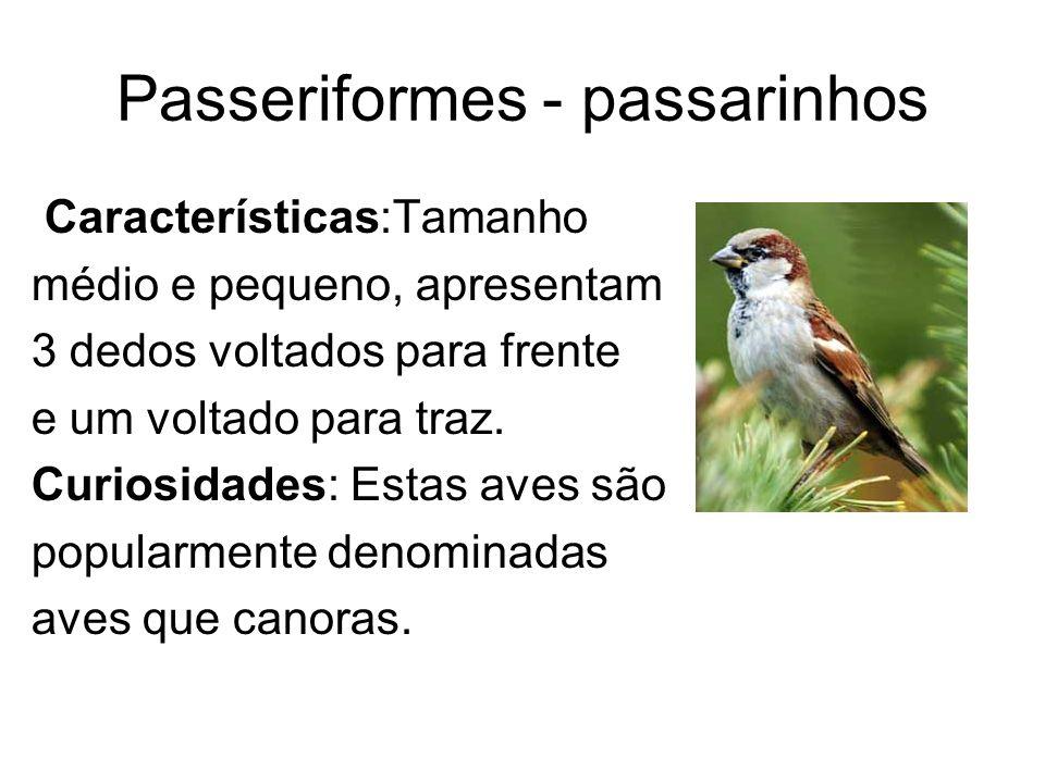 Passeriformes - passarinhos Características:Tamanho médio e pequeno, apresentam 3 dedos voltados para frente e um voltado para traz. Curiosidades: Est