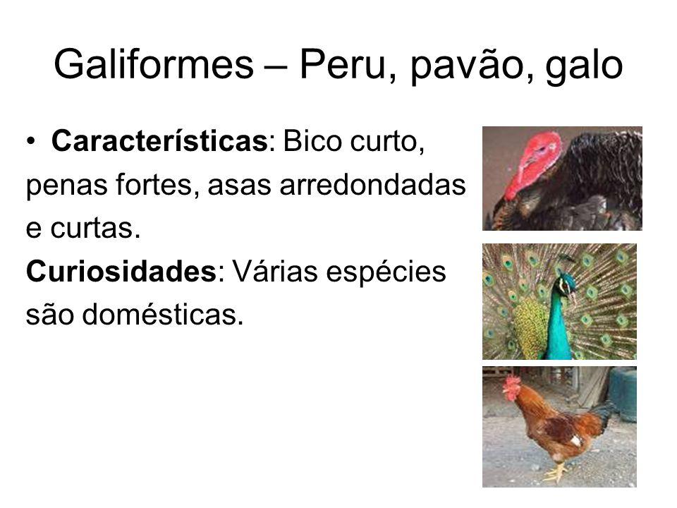 Galiformes – Peru, pavão, galo Características: Bico curto, penas fortes, asas arredondadas e curtas. Curiosidades: Várias espécies são domésticas.