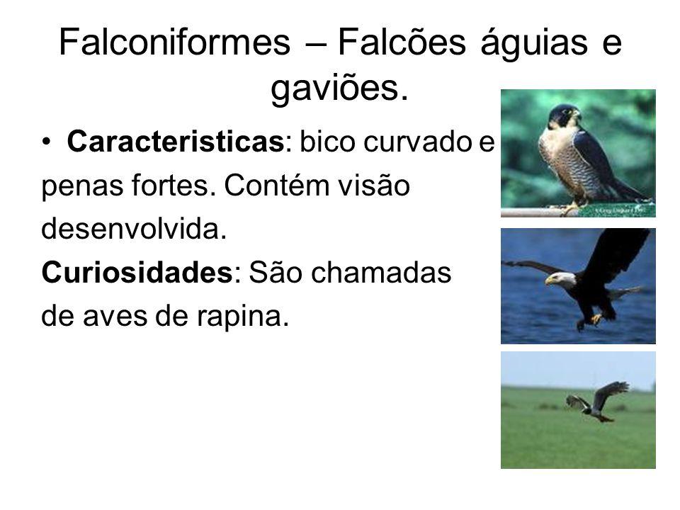 Falconiformes – Falcões águias e gaviões. Caracteristicas: bico curvado e penas fortes. Contém visão desenvolvida. Curiosidades: São chamadas de aves