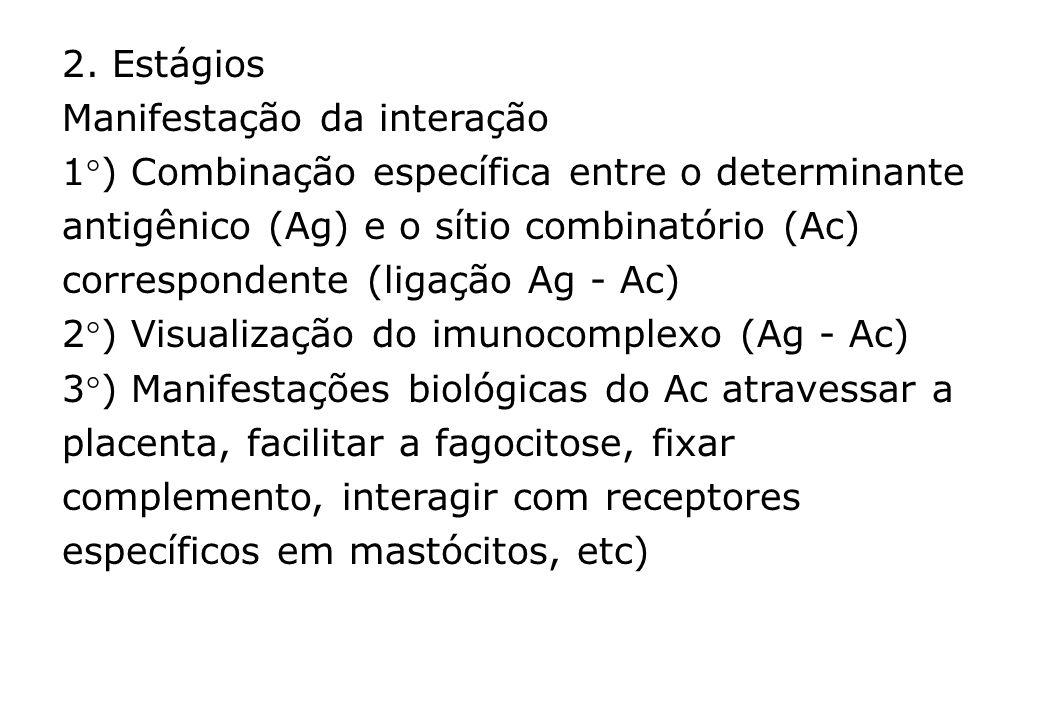 2. Estágios Manifestação da interação 1) Combinação específica entre o determinante antigênico (Ag) e o sítio combinatório (Ac) correspondente (ligaçã