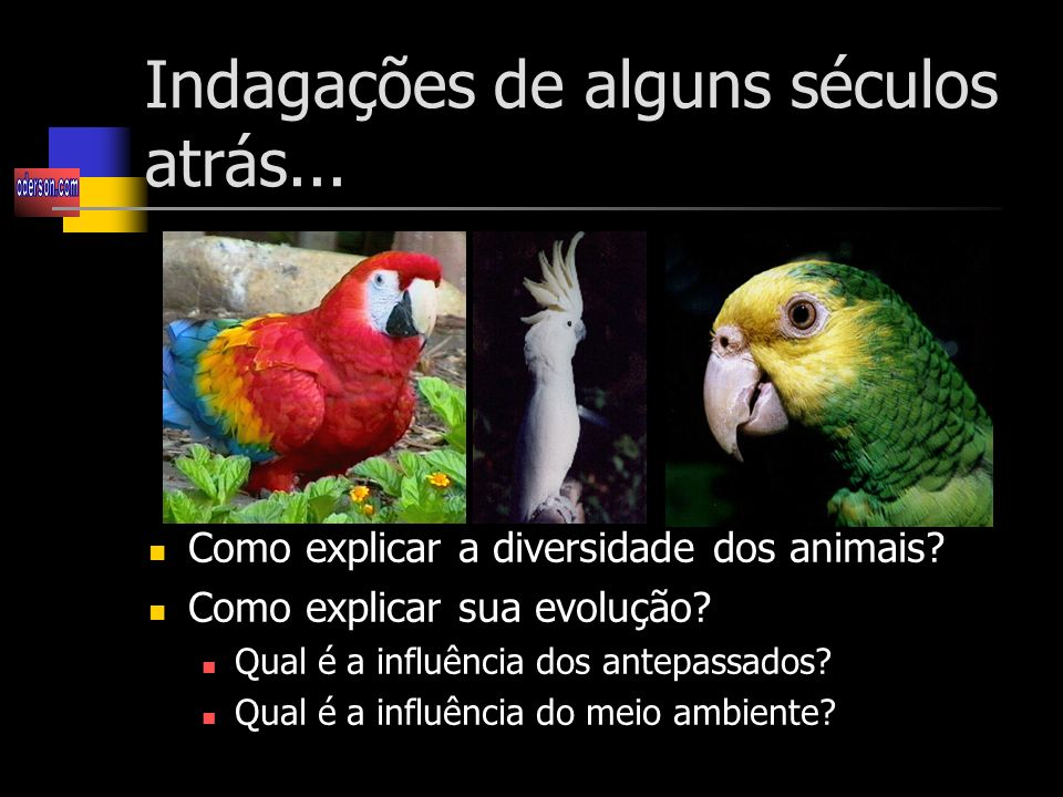 Indagações de alguns séculos atrás...Como explicar a diversidade dos animais.