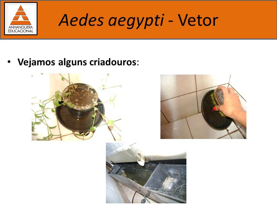Importância dos estudos biológicos Aedes aegypti - Vetor Vejamos alguns criadouros: