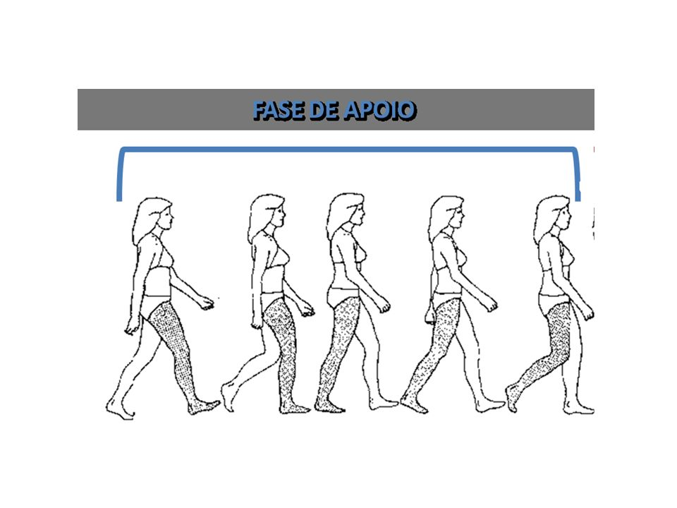Contato Inicial apoio do calcanhar, ante-pé elevado A posição do pé e o apoio do calcanhar promovem o primeiro pivô de rolamento do tornozelo.