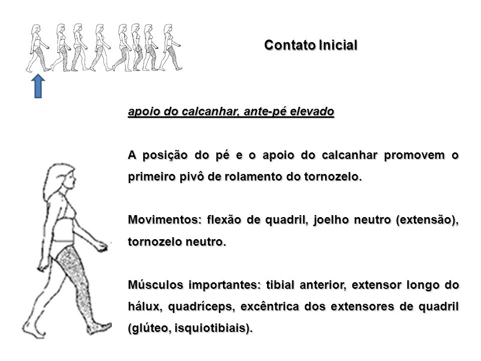 Contato Inicial apoio do calcanhar, ante-pé elevado A posição do pé e o apoio do calcanhar promovem o primeiro pivô de rolamento do tornozelo. Movimen