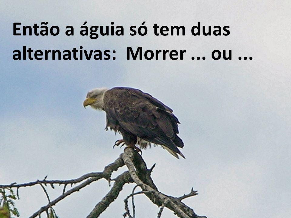 Então a águia só tem duas alternativas: Morrer... ou...