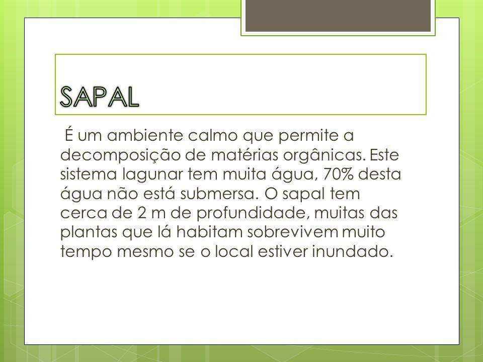 Existem 3 niveis de sapal: o sapal alto, o sapal médio e o sapal baixo.