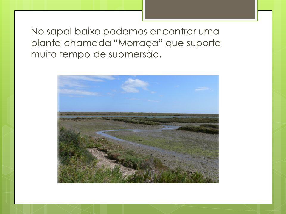 Depois da zona sapal encontramos as dunas onde a paisagem muda, passa para vegetações diferentes e cores diferentes.