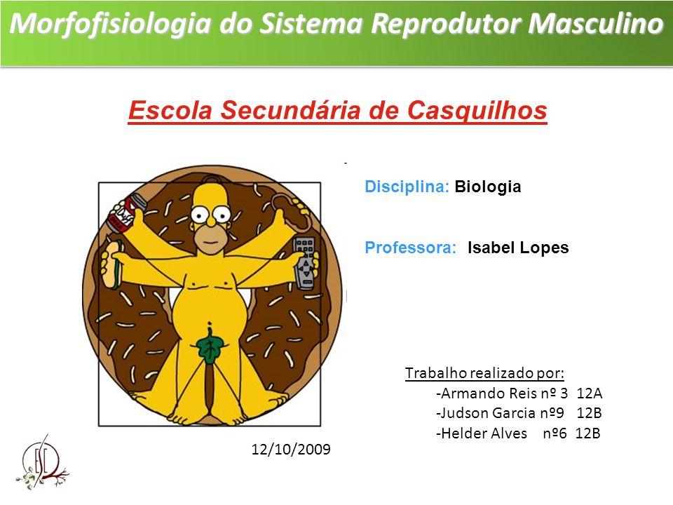 Morfofisiologia do Sistema Reprodutor Masculino Morfofisiologia do Sistema Reprodutor Masculino Escola Secundária de Casquilhos » Trabalho realizado p