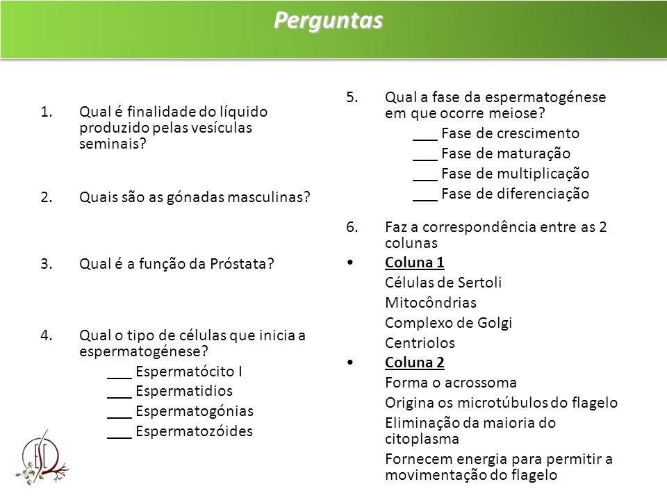 PerguntasPerguntas 1.Qual é finalidade do líquido produzido pelas vesículas seminais? 2.Quais são as gónadas masculinas? 3.Qual é a função da Próstata
