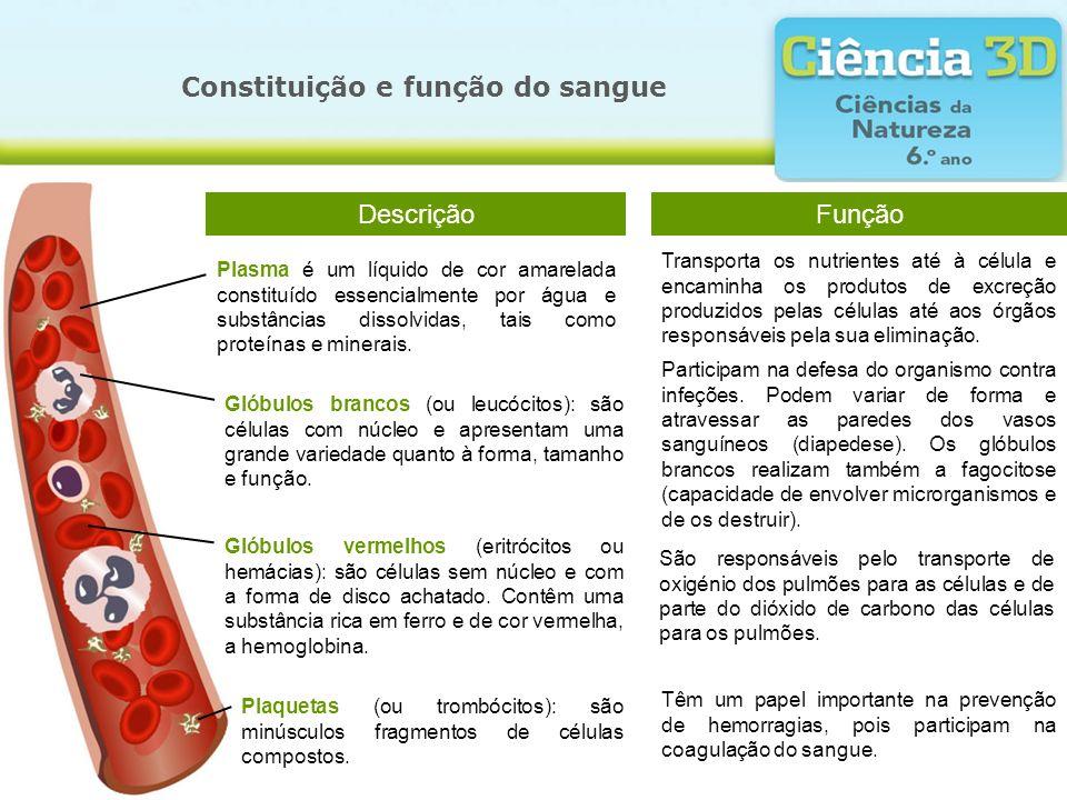 Constituição e função do sangue Glóbulos vermelhos (eritrócitos ou hemácias): são células sem núcleo e com a forma de disco achatado. Contêm uma subst