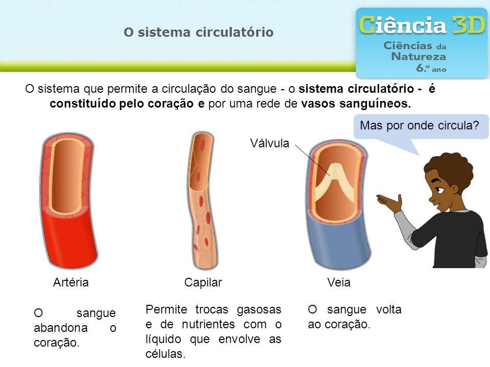 O sistema circulatório O sistema que permite a circulação do sangue - o sistema circulatório - é constituído pelo coração e por uma rede de vasos sang