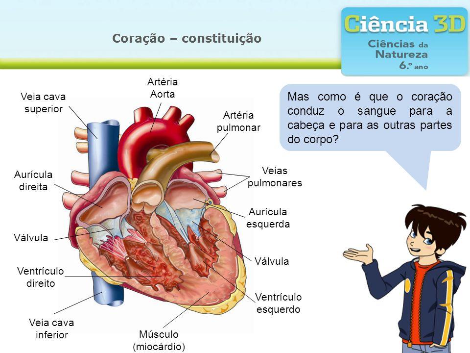Coração – constituição Mas como é que o coração conduz o sangue para a cabeça e para as outras partes do corpo? Músculo (miocárdio) Veias pulmonares A