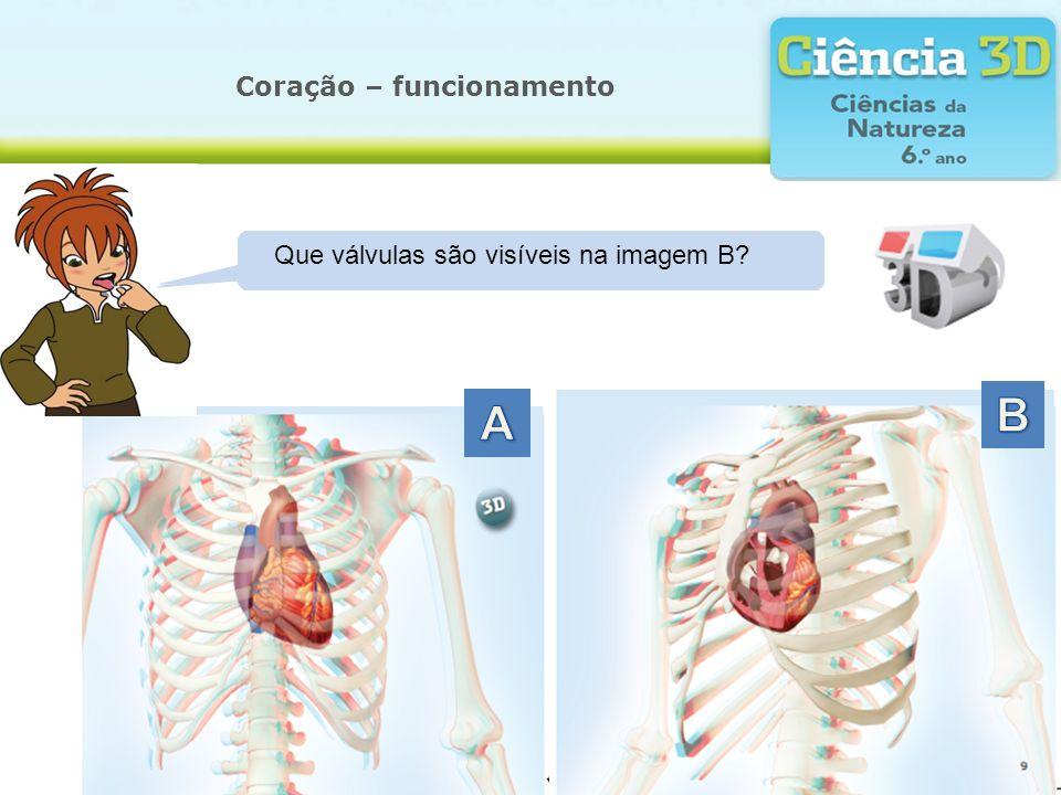 Coração – funcionamento Qual é a forma do coração? Onde se localiza o coração? Que corte foi realizado na imagem B? Que válvulas são visíveis na image
