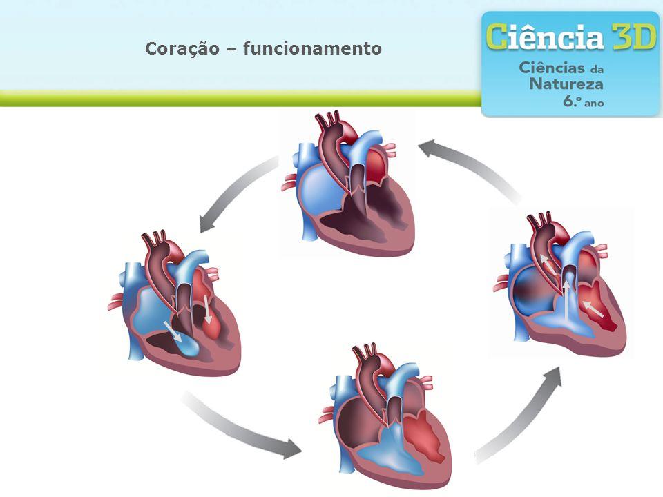 A grande e pequena circulação Ventrículo direito Aurícula direita Artérias pulmonares Veias pulmonares Pequena circulação Aurícula esquerda Ventrículo esquerdo Artéria aorta Grande circulação Pulmões Capilares Vasos que transportam sangue venoso em direção ao coração