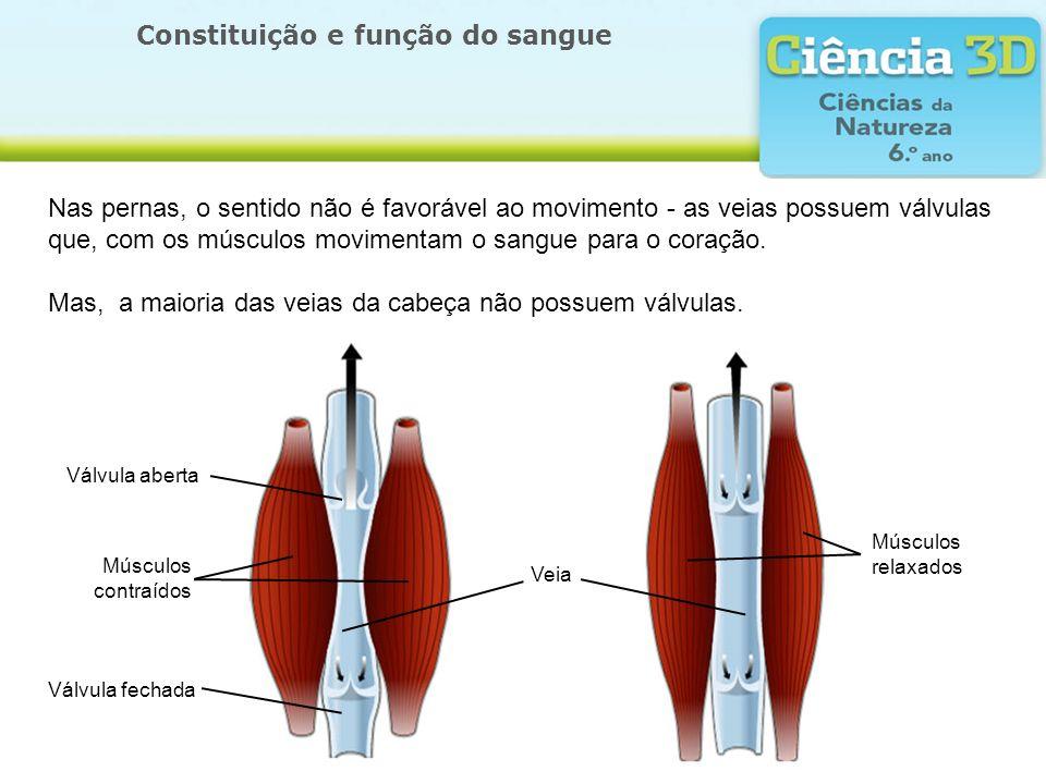 Constituição e função do sangue Válvula aberta Veia Válvula fechada Músculos contraídos Músculos relaxados Nas pernas, o sentido não é favorável ao mo