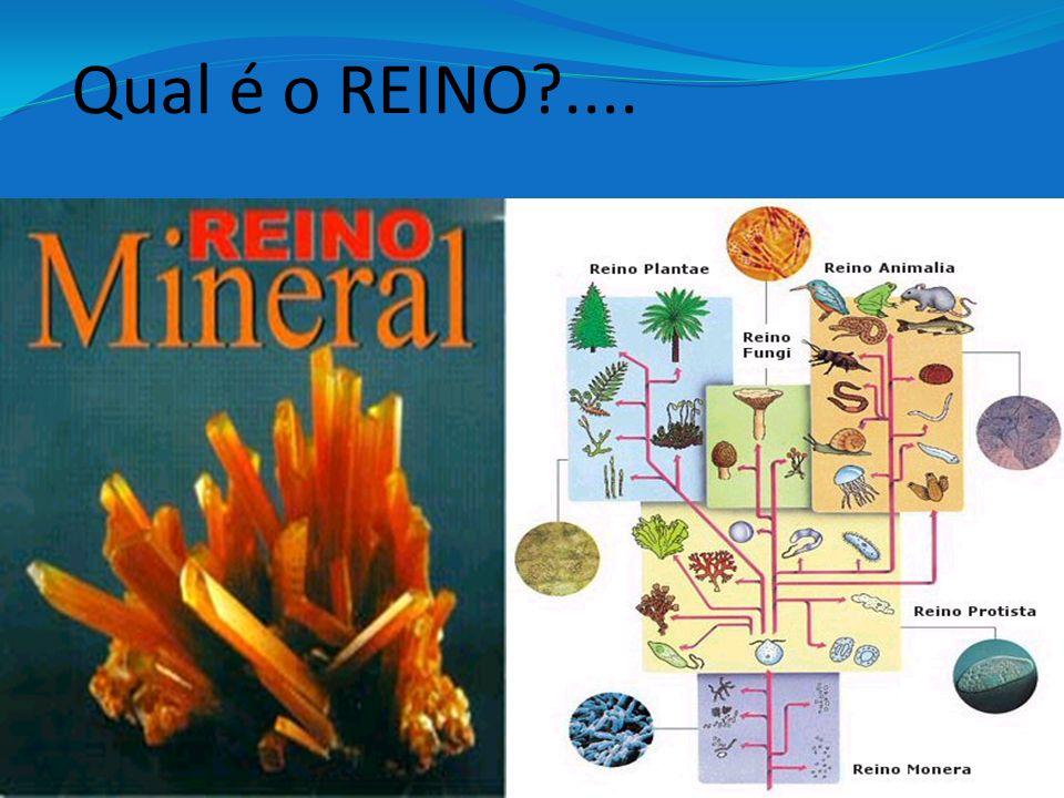 Qual é o REINO?....