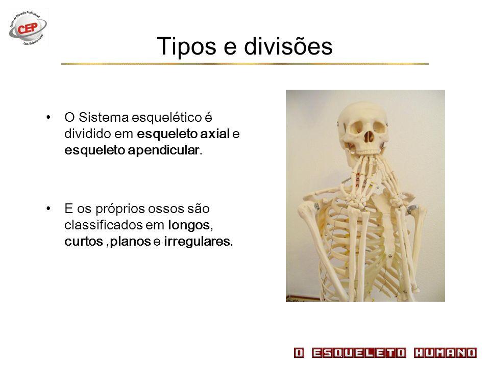 Tipos e divisões O Sistema esquelético é dividido em esqueleto axial e esqueleto apendicular. E os próprios ossos são classificados em longos, curtos,