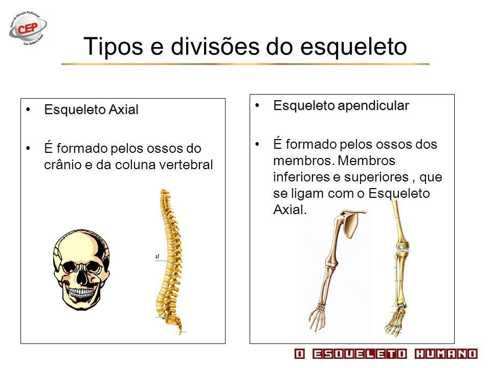 Tipos e divisões do esqueleto Esqueleto AxialEsqueleto Axial É formado pelos ossos do crânio e da coluna vertebral Esqueleto apendicularEsqueleto apen