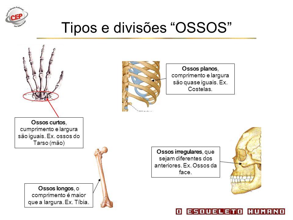 Ossos curtos, cumprimento e largura são iguais. Ex. ossos do Tarso (mão) Tipos e divisões OSSOS Ossos longos, o comprimento é maior que a largura. Ex.