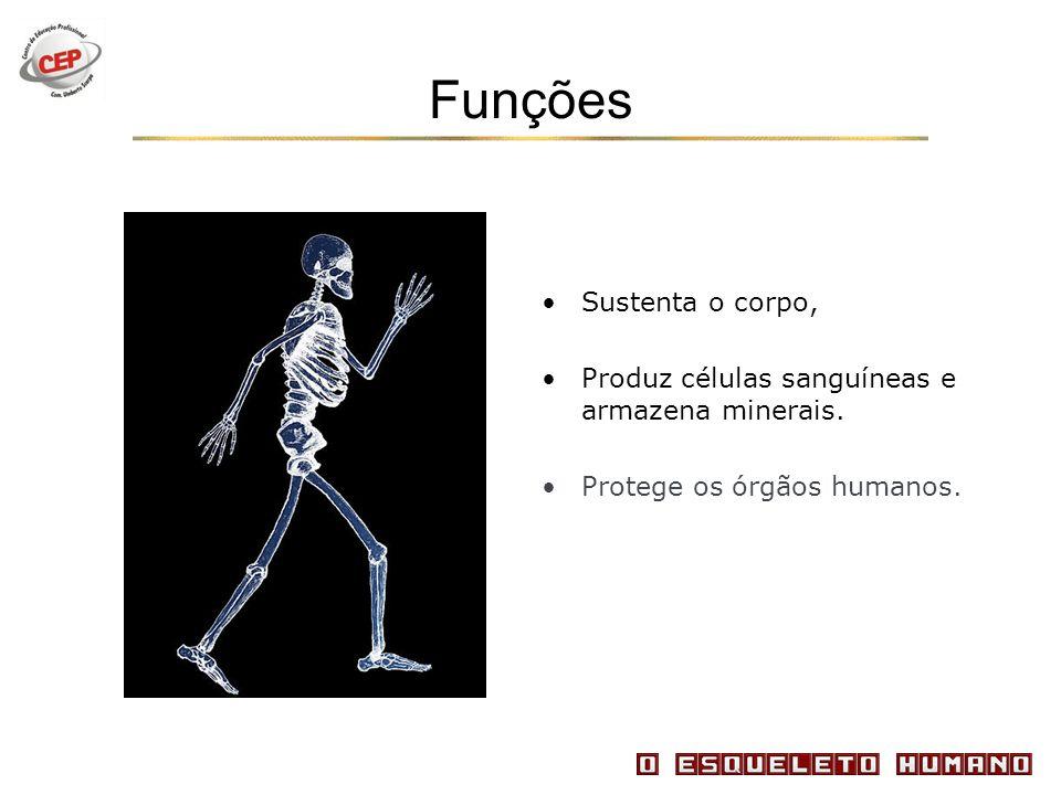 Funções Sustenta o corpo, Produz células sanguíneas e armazena minerais. Protege os órgãos humanos.