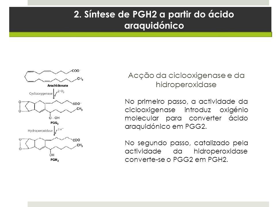 2. Síntese de PGH2 a partir do ácido araquidónico Acção da ciclooxigenase e da hidroperoxidase No primeiro passo, a actividade da ciclooxigenase intro