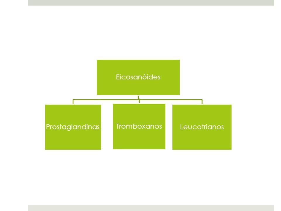 PROSTAGLANDINAS Contém um anel de 5 carbonos Dividem-se em 2 grupos: PGE – solúveis em éter PGE1, PGE2, … PGF – solúveis em tampão fosfato Regulam a síntese do mensageiro intracelular cAMP.