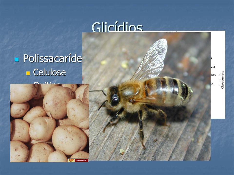 Glicídios Polissacarídeos Polissacarídeos Celulose Celulose Quitina Quitina Amido Amido glicogênio glicogênio