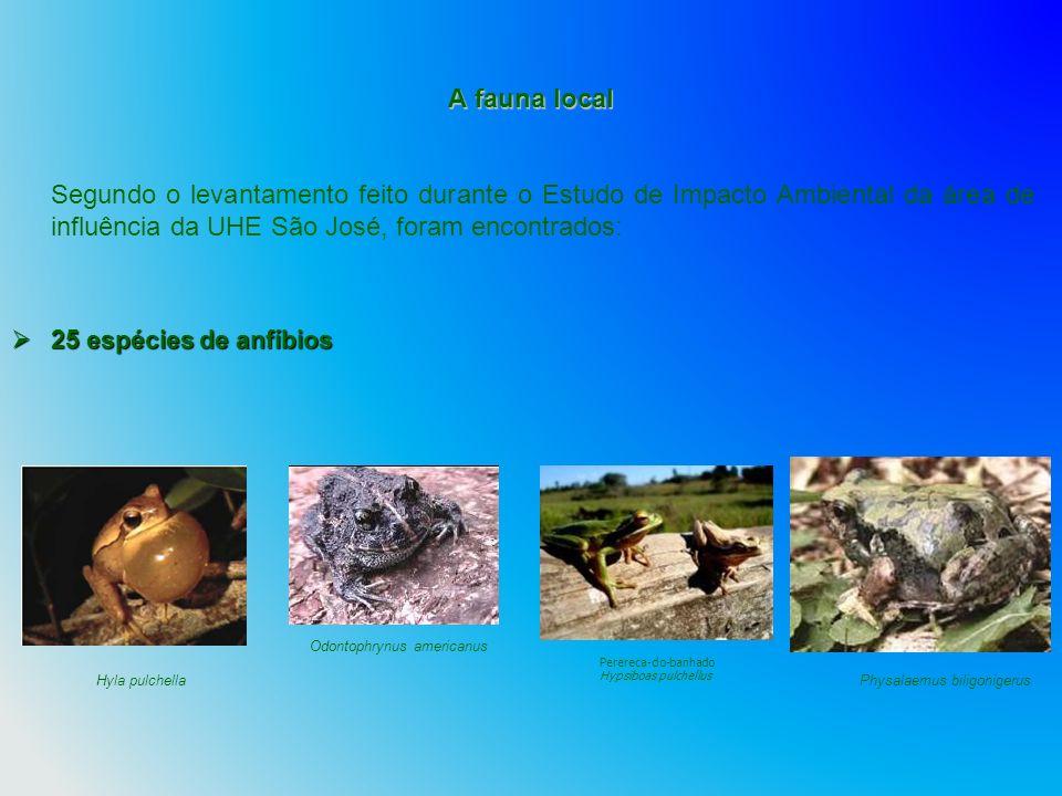 A fauna local Segundo o levantamento feito durante o Estudo de Impacto Ambiental da área de influência da UHE São José, foram encontrados: 25 espécies