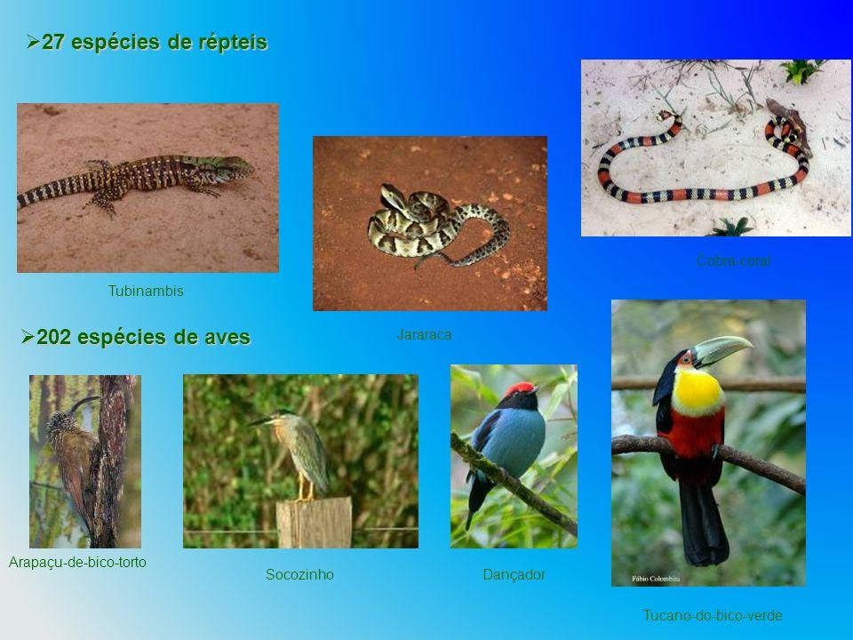 27 espécies de répteis 27 espécies de répteis 202 espécies de aves 202 espécies de aves Arapaçu-de-bico-torto DançadorSocozinho Tucano-do-bico-verde T