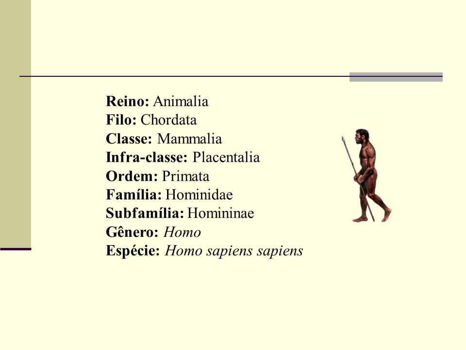 Reino: Animalia Filo: Chordata Classe: Mammalia Infra-classe: Placentalia Ordem: Primata Família: Hominidae Subfamília: Homininae Gênero: Homo Espécie