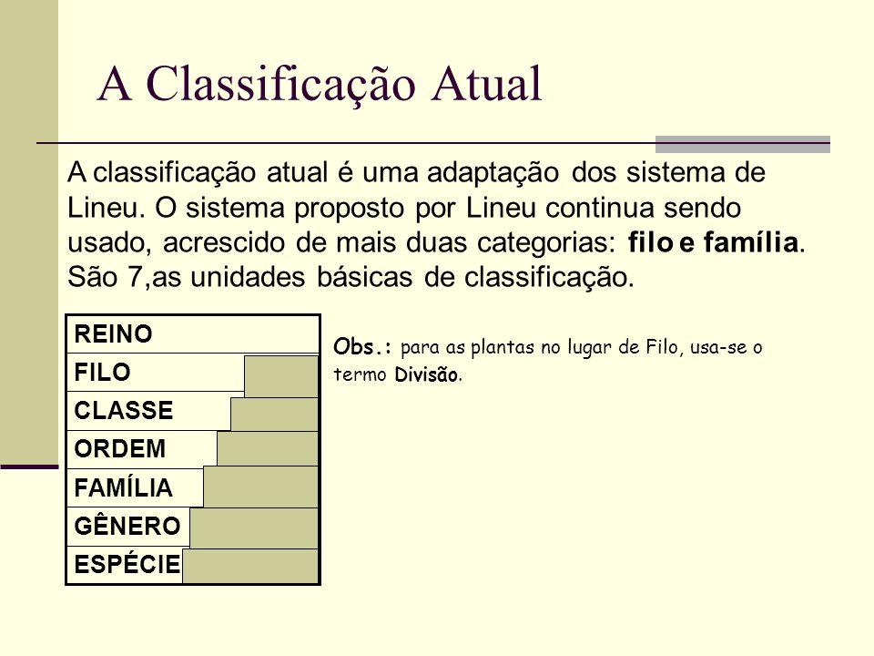 A Classificação Atual A classificação atual é uma adaptação dos sistema de Lineu. O sistema proposto por Lineu continua sendo usado, acrescido de mais