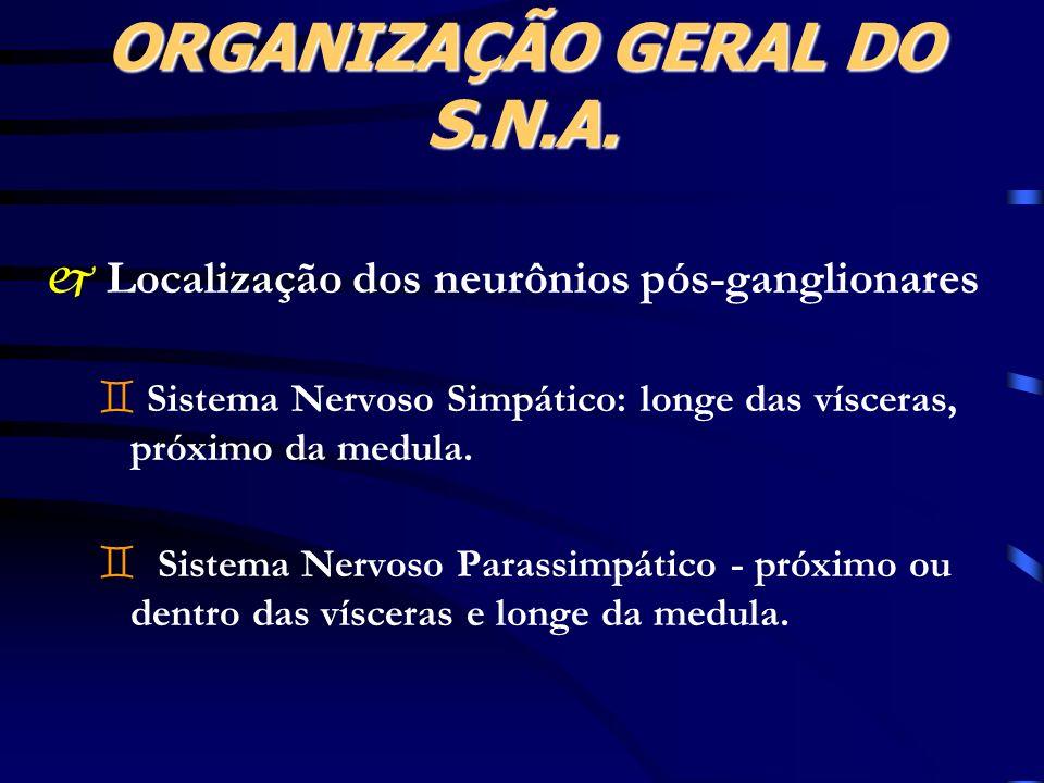 j Localização dos neurônios pós-ganglionares ` Sistema Nervoso Simpático: longe das vísceras, próximo da medula. ` Sistema Nervoso Parassimpático - pr