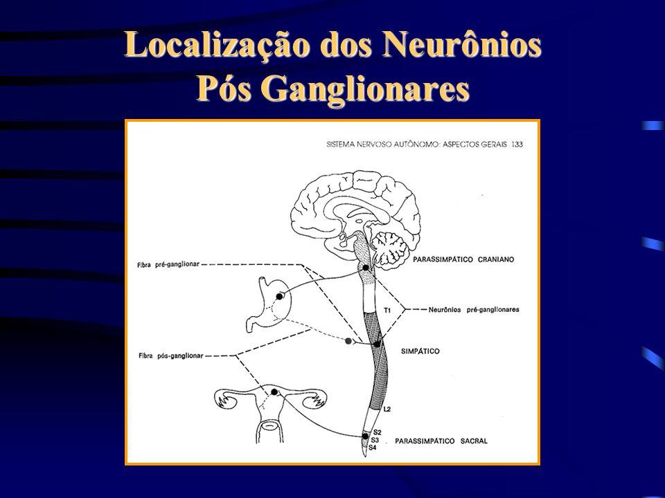 Localização dos Neurônios Pós Ganglionares