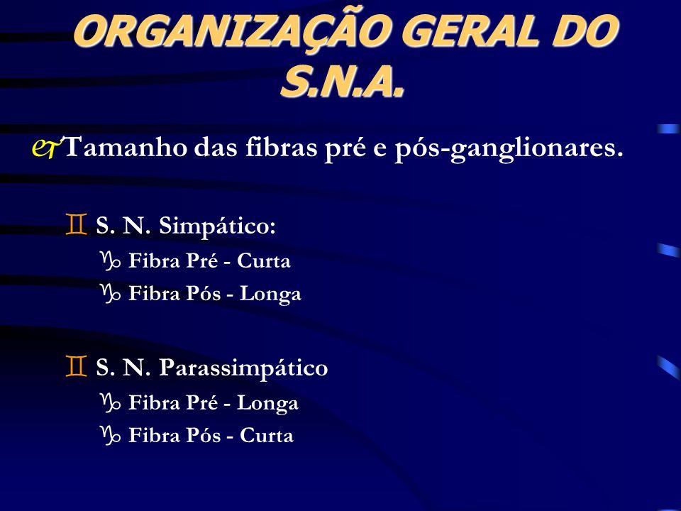 ORGANIZAÇÃO GERAL DO S.N.A. jTamanho das fibras pré e pós-ganglionares. ` S. N. Simpático: g Fibra Pré - Curta g Fibra Pós - Longa ` S. N. Parassimpát