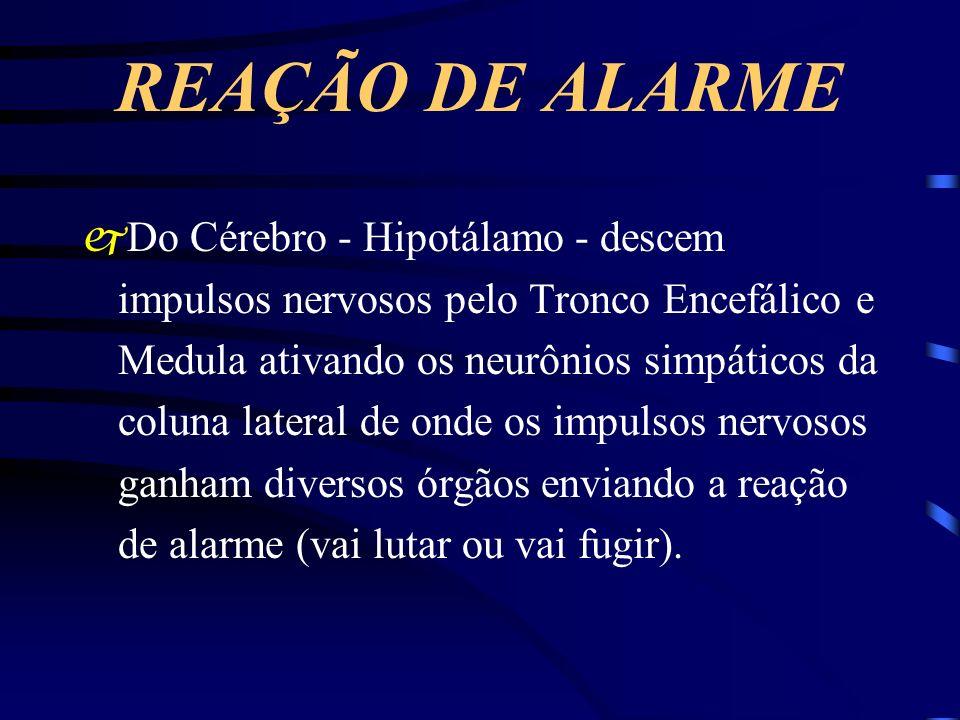 REAÇÃO DE ALARME jDo Cérebro - Hipotálamo - descem impulsos nervosos pelo Tronco Encefálico e Medula ativando os neurônios simpáticos da coluna latera