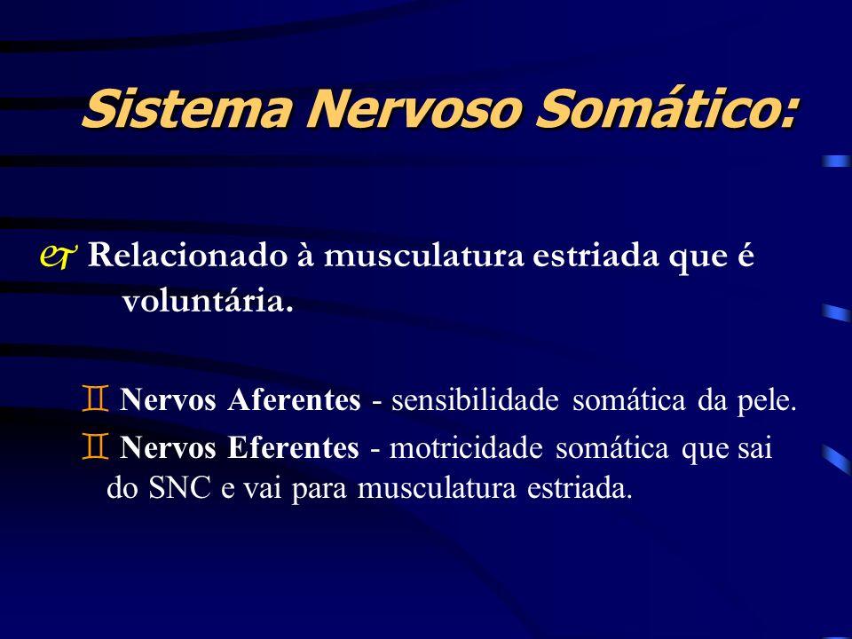 Sistema Nervoso Somático: j Relacionado à musculatura estriada que é voluntária. ` Nervos Aferentes - sensibilidade somática da pele. ` Nervos Eferent