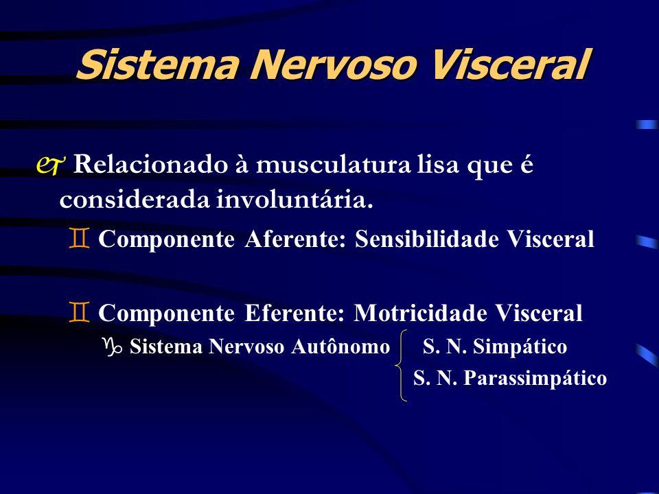 Sistema Nervoso Visceral j Relacionado à musculatura lisa que é considerada involuntária. ` Componente Aferente: Sensibilidade Visceral ` Componente E