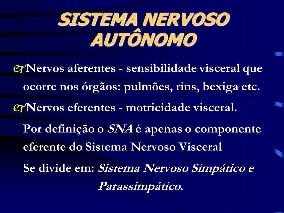 SISTEMA NERVOSO AUTÔNOMO jNervos aferentes - sensibilidade visceral que ocorre nos órgãos: pulmões, rins, bexiga etc. jNervos eferentes - motricidade