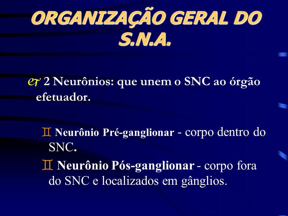 ORGANIZAÇÃO GERAL DO S.N.A. 2 Neurônios: que unem o SNC ao órgão efetuador. ` Neurônio Pré-ganglionar - corpo dentro do SNC. ` Neurônio Pós-ganglionar