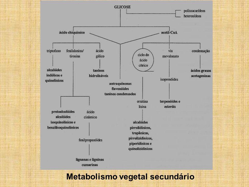Metabolismo primário e secundário não ocorrem de forma independente em um mesmo produtor: metabolismo da glicose Condições ideais para produção de biomassa (crescimento da planta) podem ser diferentes das condições ideais para produção do p.a.