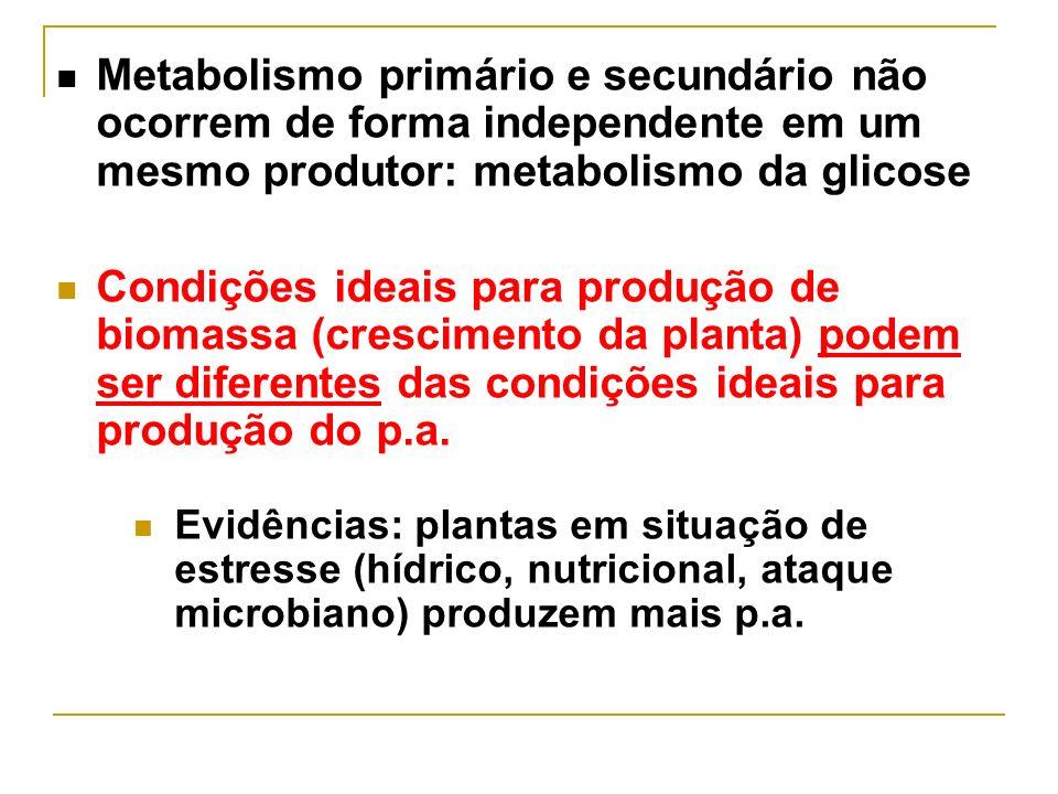 Metabolismo primário e secundário não ocorrem de forma independente em um mesmo produtor: metabolismo da glicose Condições ideais para produção de bio